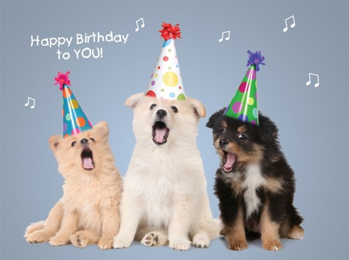 Dogs Singing Happy Birthday Videos